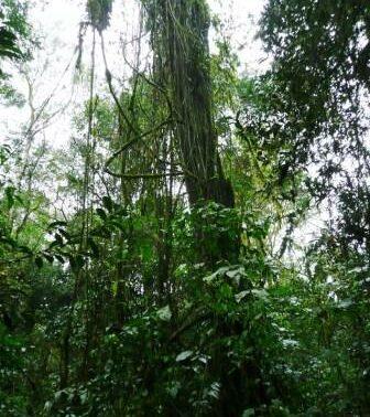 Forest Emerald Green Corrdior