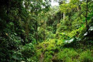 Nangaritza forests.
