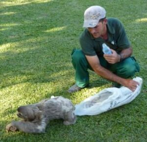 Ranger Adelei releasing a sloth at REGUA.