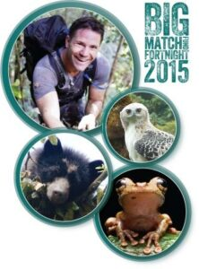 Big Match Fortnight images of Steve Backshall, Spectacled Bear, Black-and-chestnut Eagle and Buckley's Slender-legged Tree Frog.