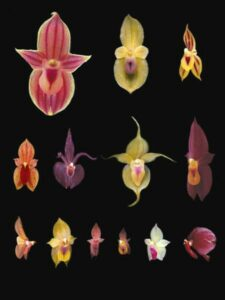 Images of orchids.