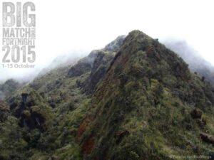 Paramo on Cerro Candelaria.