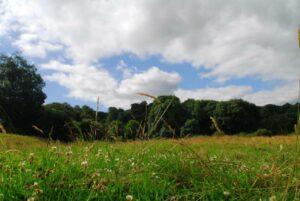 Kites Hill reserve.