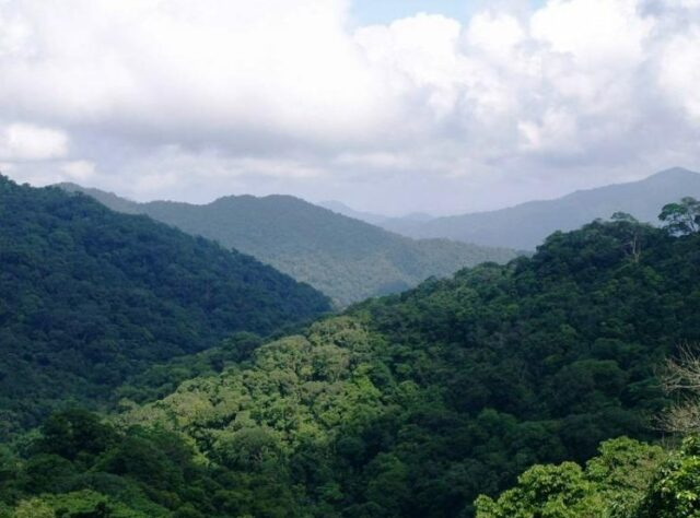 Khe Nuoc Trong forest, Vietnam