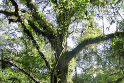 bosque-mesofilo-de-montana-sierra-gorda-roberto-pedraza.jpg