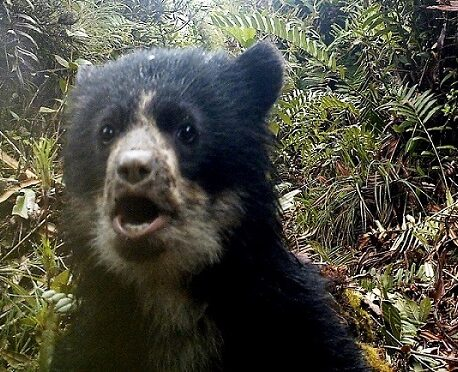 Harry potter Andean bear