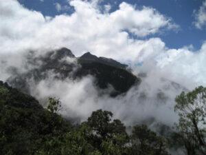 Forest at Yanacocha.