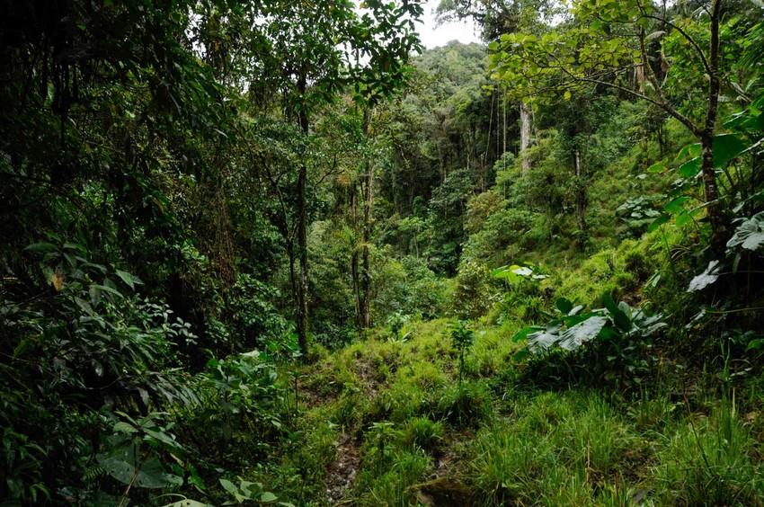Nangaritza, Ecuador. Credit Trotsky Riera Vite, NCI