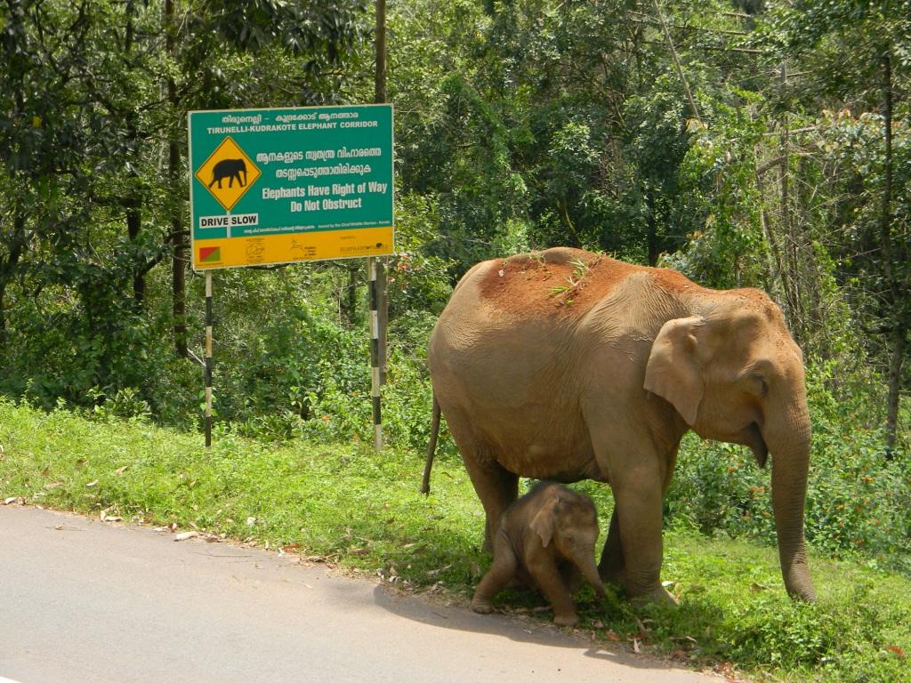 Elephant Corridor Sign
