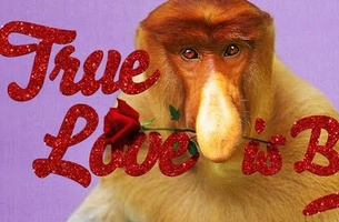 True love, proboscis monkey