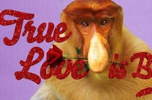 True love, proboscis monkey