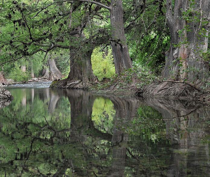 Ancient Forests of Sierra Gorda © Roberto Pedraza Ruiz