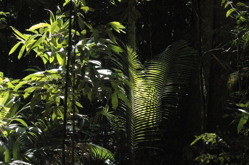 The Atlantic rainforest of Brazil. Credit WLT/John A Burton.