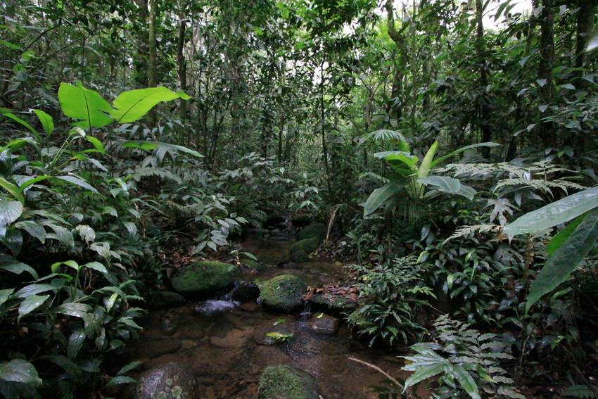 Normal marmoset habitat; photo credit World Land Trust