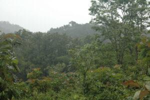 Tirunelli-Kudrakote Corridor, India, tiger habitat. Credit Kirsty Burgess