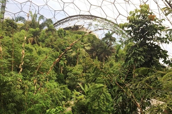 Rainforest Biome