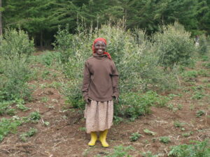 Farmer at Mount Kenya Reforestation Site, Credit WLT/Natalie Singleton.