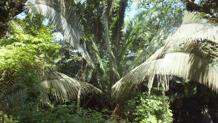Tropical forest at La Milpa, Rio Bravo Conservation and Management Area, Belize, credit WLT / Christina Ballinger