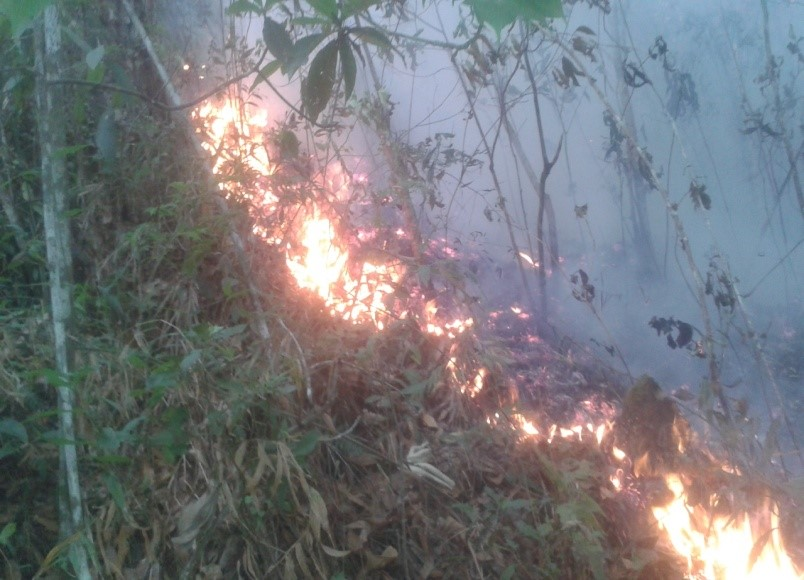 Forest fire in the Colopeca hill. (C) Lurvin Mejia
