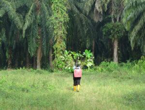Reforestation-project,Keruak-Corridor. ©HUTAN