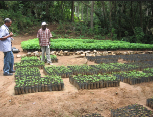 Tree Nursery, Tanzania. Credit: Lota Melamari (WCST)