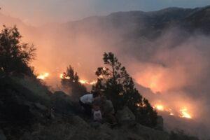 Fire in the Caucasus Wildlife Refuge