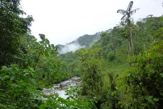 Narupa Reserve