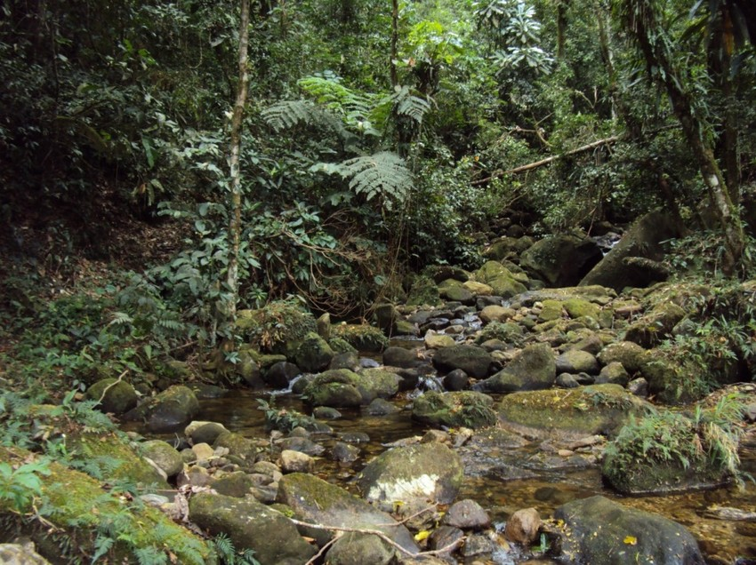 REGUA, Brazil. Forest stream. Credit REGUA