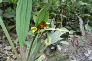 Rana Terribilis reserve, Colombia. Credit Bethan John