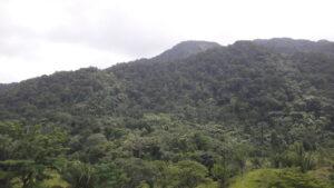Forested Mountainside, Sierra Santa Cruz, Guatemala, credit Fundaeco