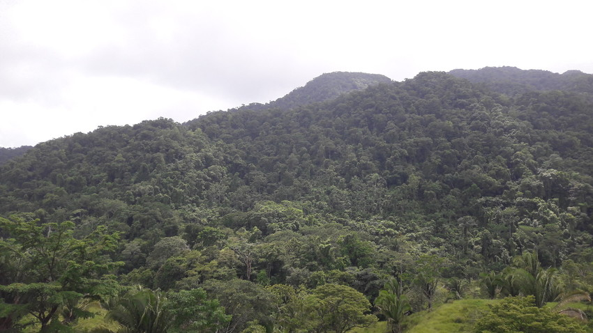 Forested Mountainside, Sierra Santa Cruz, Guatemala, credit Fundaeco