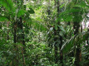 Rio Canande Reserve Ecuador. Credit Nigel Simpson