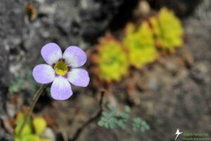 Buy an Acre protecting rare plants in Mexico, Credit Roberto Pedraza Ruiz
