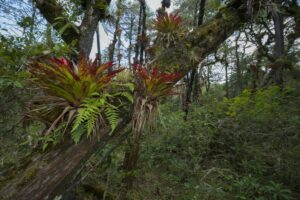 Buy an Acre funded Cerro-Prieto Cerro la Luz reserve, Mexico. Credit Roberto Pedraza Ruiz