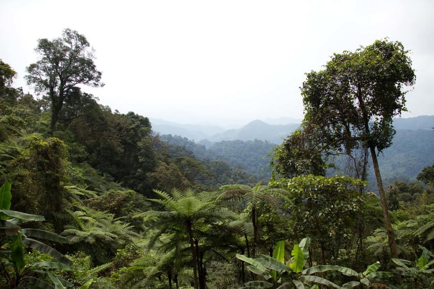 Carbon Balanced, Vietnam. Credit Rob Beale