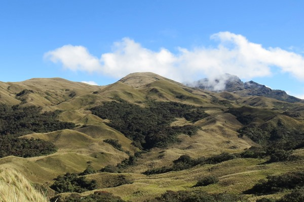 Community conservation of Montane Forest and Páramo, Peru