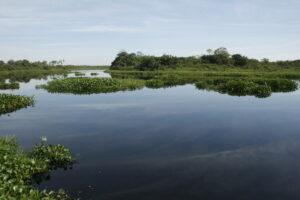 Chaco-Pantanal Reserve, Paraguay. Credit Guyra Paraguay/Jose Luis Cartes