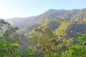 Montane Forest in Ecuador