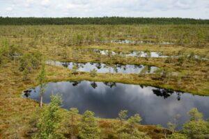 Kemeri National Park bogs
