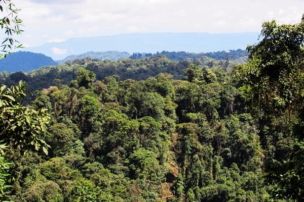 Tropical forests, Narupa Reserve, Ecuador © Fundacion Jocotoco