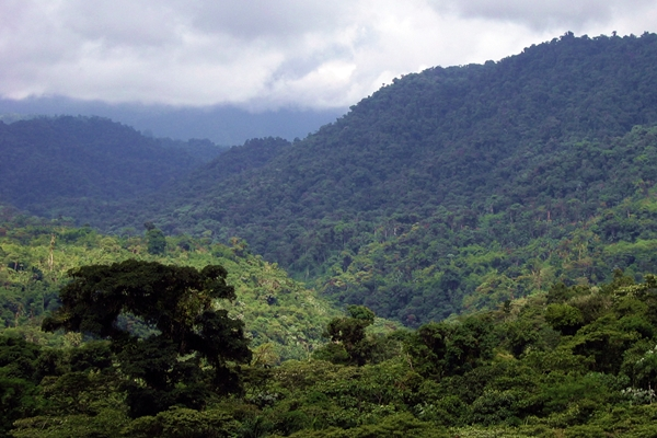Tropical forest with mountain backdrop in the Amazonian Andes, Ecuador