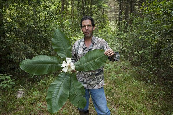 Roberto Pedraza Ruiz with magnolia species Magnolia rzedowskii