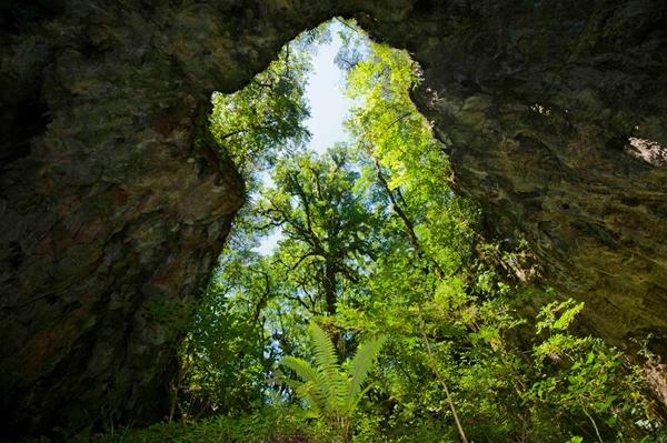 Ancient oak in Sierra Gorda, Mexico