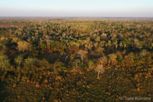 Beni savanna habitat of Laney Rickman Reserve, Bolivia © Tjalle Boorsma
