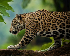 © Enrique Aguirre/Shutterstock