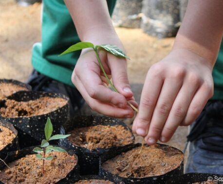 Child's hands planting a tree in REGUA, Brazil