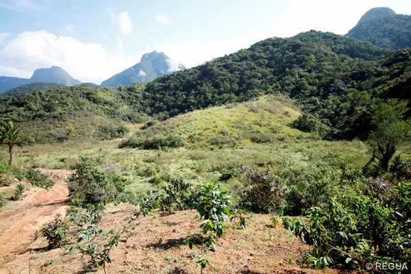 The plot ready for reforestation connecting two pieces of Atlantic Forest © REGUA
