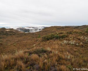 Paramo habitat of the Blue-throated Hillstar © Paul Székely