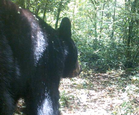 Black Bear, Mexico