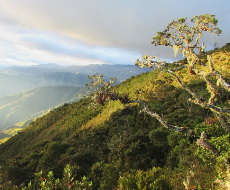 Cloud forest and paramo in northern Peru. Image: NCP